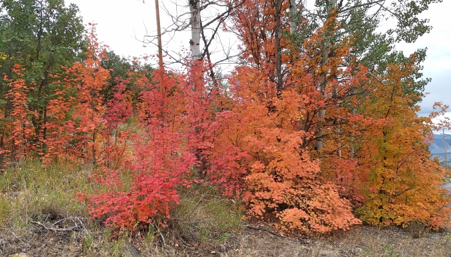 Weekend and FallColors